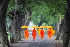 Vietnamese monks taking walk in a park with umbrella in hand